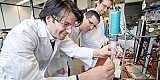 Iodidsalze machen Biokatalysatoren für Brennstoffzellen stabil
